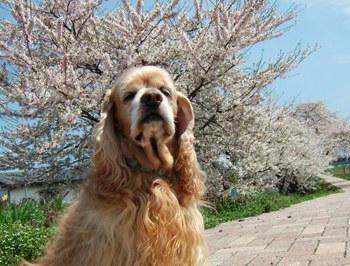 4月28日お花見散歩①