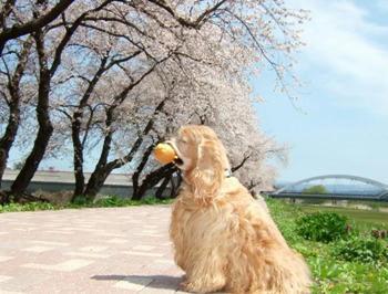 4月28日お花見散歩③