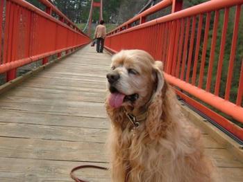 5月5日雪谷川ダムフォリストパーク・軽米(つり橋)