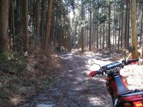 舟生沢林道