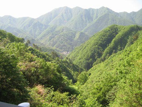 大志戸林道