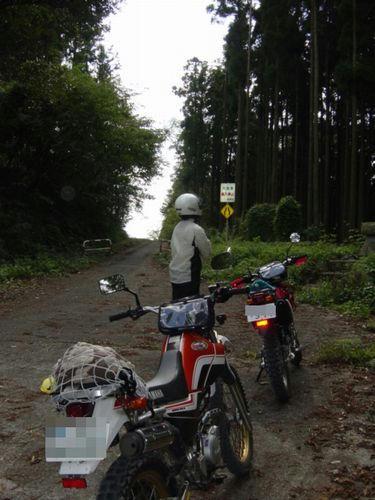 金谷元名林道