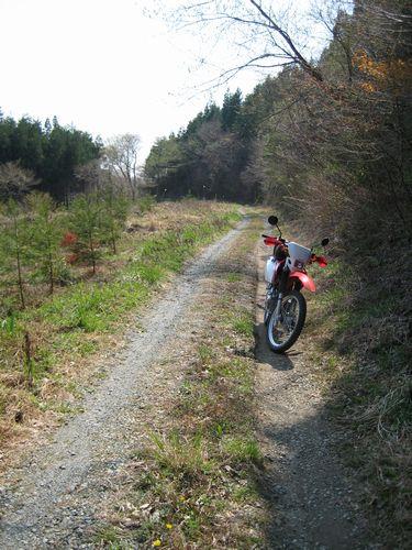 萩ダム近くの林道