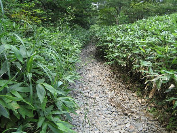 甲子林道方面