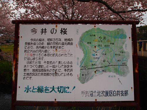 今井の桜看板