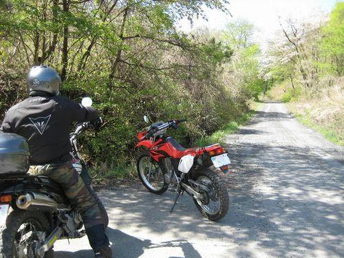 大森林道へ
