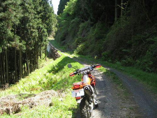 原木沢林道
