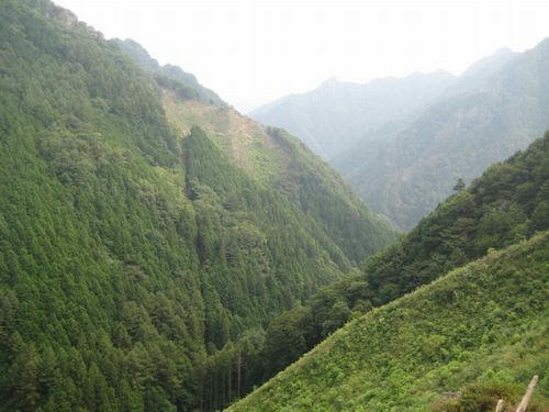 上野大滝林道