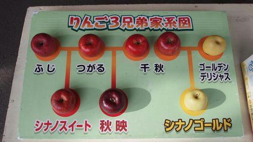 りんご3兄弟家計図