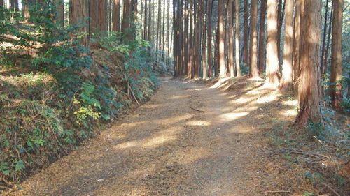 名無し林道