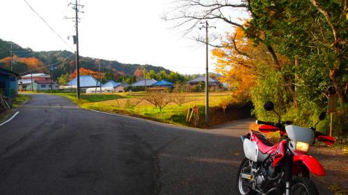 大鹿倉林道