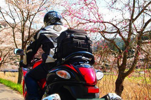 鮫川沿いの桜並木