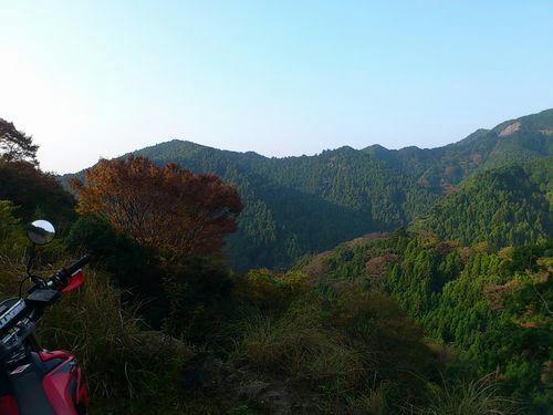 袖の木林道