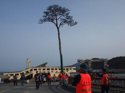 陸前高田、高田松原の松の木