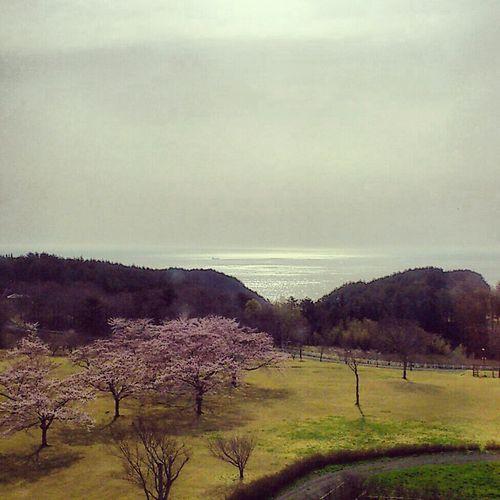 グリーンピアから太平洋を見る。