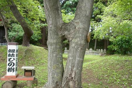 縁結びの樹