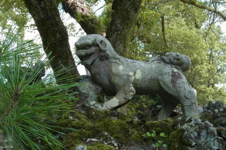 狛犬・阿形