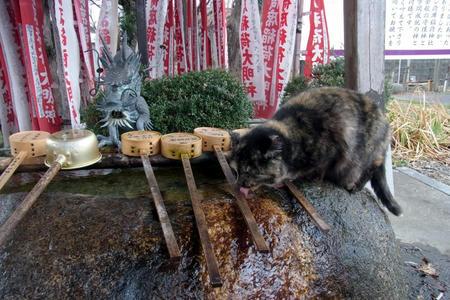 水飲みネコ