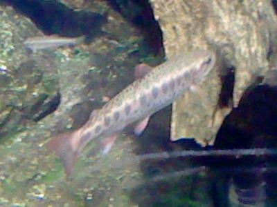川魚の写真1