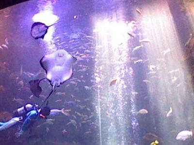 大水槽の写真
