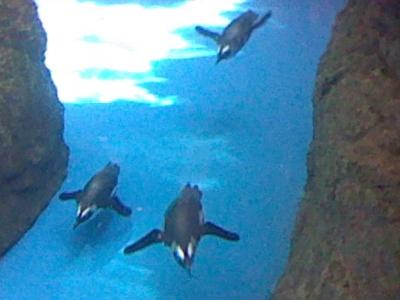 上からペンギン