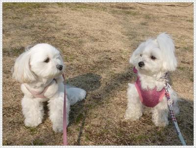 chappy & nana