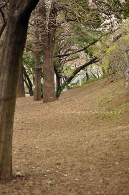 20100410DSC_0570.jpg