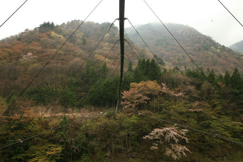 20110505_R003.JPG