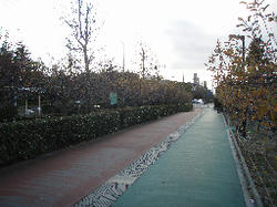 P1130549.jpg