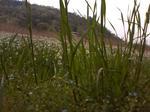 池の花、草