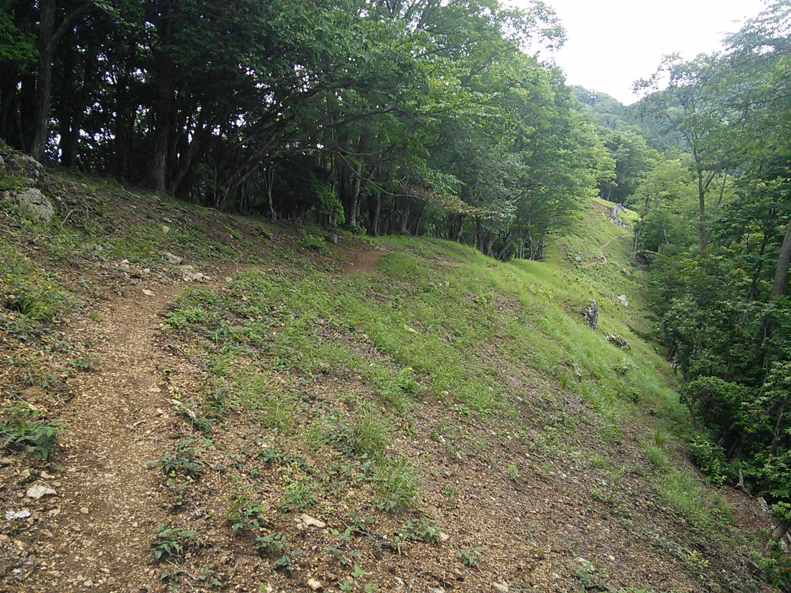 [PR]2015年6月28日 有間山稜・日向沢ノ峰