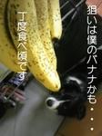 DVCbanakuma.jpg