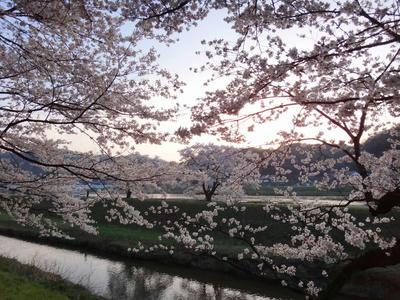 島根県雲南市木次町 奥出雲 桜の名所3
