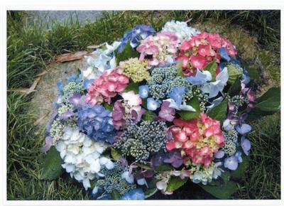 紫陽花 の開花イメージ