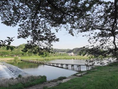 斐伊川土手の葉桜と出会い橋