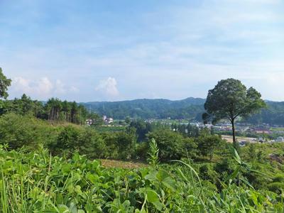 日登の郷 夏の里山
