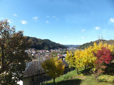 秋の日登 紅葉 イチョウ